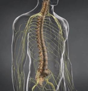Spinal Stenosis Illustration