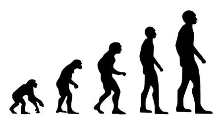 Back pain may be due to evolution & spine shape